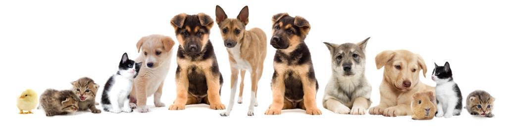 SA Dog Rescue Animals